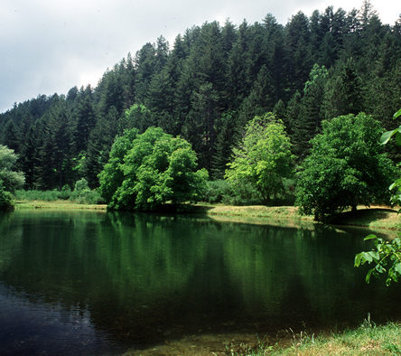 """The Sila National Park is the star of """"BorgoItalia"""""""