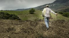 Nuova vita per gli orti a terrazza, 9 ettari seminati a canapa