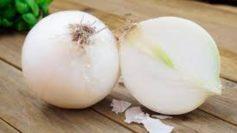 La cipolla bianca di Castrovillari tra le eccellenze calabresi