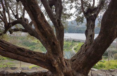 Fiumara dell'Ammendolea – Condofuri (RC)
