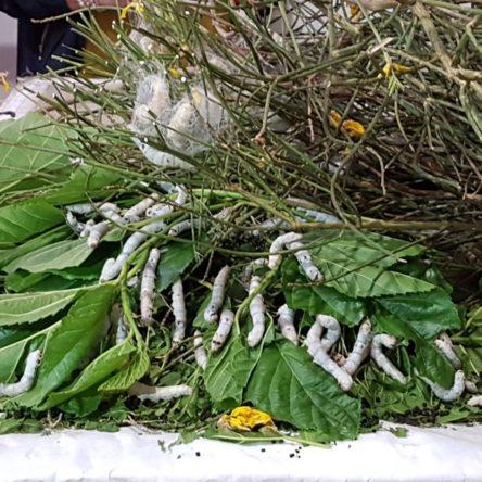(Ita) I 4 ingredienti della Calabria che cresce