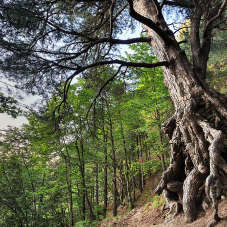 Sila National Park invites all the stakeholders of the protected area to work together for the renewal of the European Charter for Sustainable Tourism