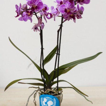 Le orchidee dell'UNICEF scendono in piazza il 21-22 aprile