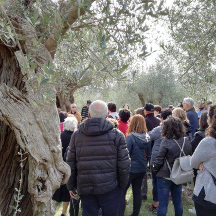 Domenica 28 ottobre in Calabria  Camminata tra gli olivi