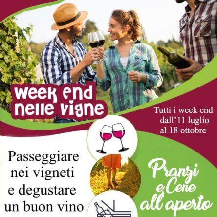Weekend nei vigneti | MTV Calabria rilancia l'enoturismo