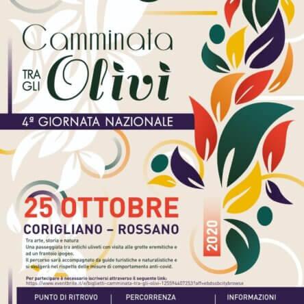 A Corigliano – Rossano la 4^ camminata tra gli ulivi secolari